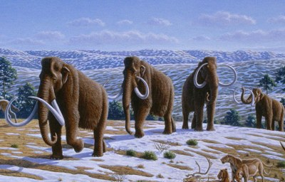 800px-woolly-mammoth-cropped-tm.jpg