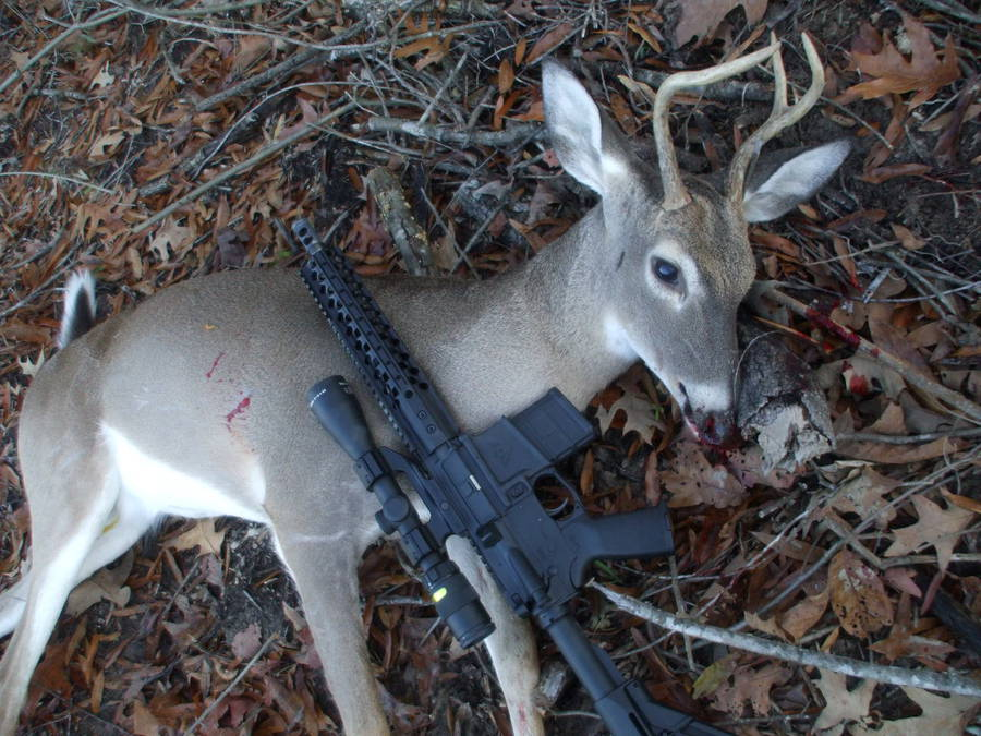 Bill Wilson Goes Hunting With The 300 Aac Blk The