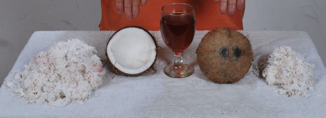 Coconut2jf