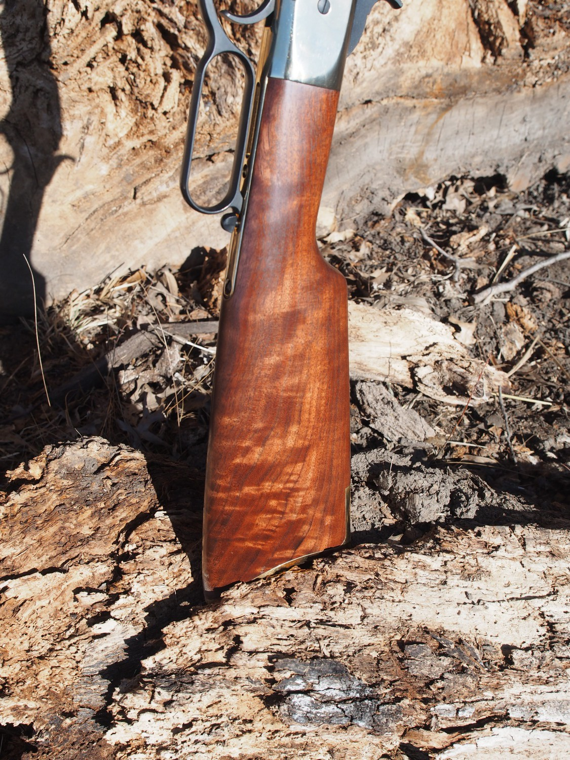 Missouri Walnut Stock
