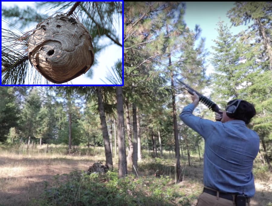 relocating a hornets nest with a shotgun the firearm