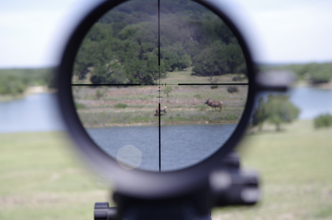 View through one of the new US Optics scopes, the SVS 1-6, mounted on a ZRODelta Venator. The rifle was mounted on a tripod next to the pool, that overlooks the lake, where some Elk were hanging out. The glass is exceptionally bright.
