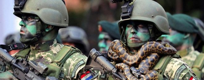Paraguayan Caballeria special forces snake