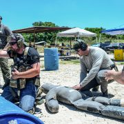 """Students in Lone Star Medics' """"Medicine X"""" class learn lifesaving medical skills integrated with practical shooting competencies."""